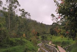 arboretum sumberbrantas