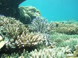 Snorkling Pantai 3 Warna